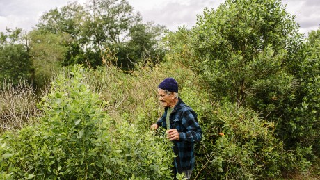 "Roosevelt ""Rooster"" Falgout walks through thick underbrush on an island that has lost 98% of its land since the mid-1950s."