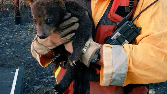 """Smokey Junior"" was rescued with only minor injuries."