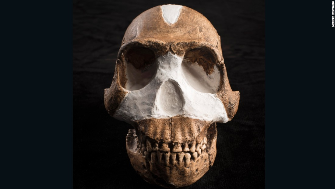 The fossils of Homo naledi were found in Rising Star Cave, South Africa, in 2013. The treasure trove of bones belonged to at least 15 individuals -- eight children, five adults, and two adolescents.