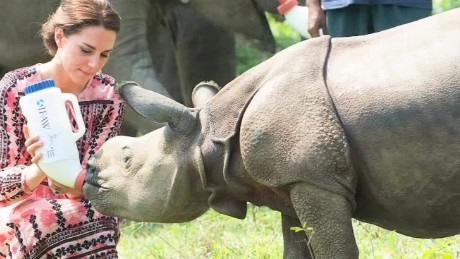 Prince William, Duchess Kate feed wildlife on safari