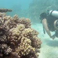 Coral bleaching Great Barrier Reef 2