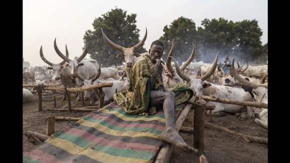 A Mundari man wakes up next to his animals and brushes his teeth with a stick. Tribesmen will often sleep with their cattle, and as close as two feet away from their most prized animal.