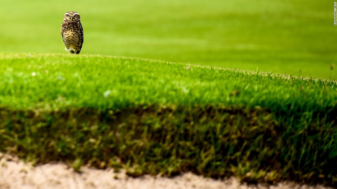 Rio 2016 is 100 days away but this spectator at the city's Olympic golf course couldn't give a hoot.
