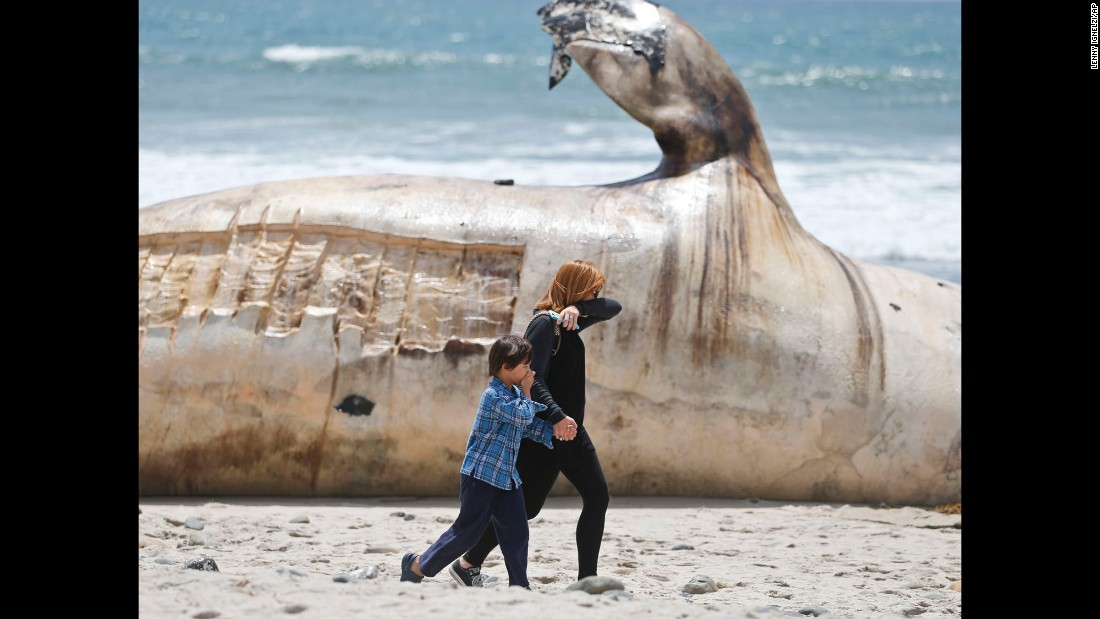 "A woman and boy cover their noses as they walk past a massive whale carcass in San Clemente, California, on Tuesday, April 26. The whale <a href=""http://www.latimes.com/local/lanow/la-me-ln-whale-carcass-removal-orange-county-20160428-story.html"" target=""_blank"">washed up on the beach</a> two days earlier."