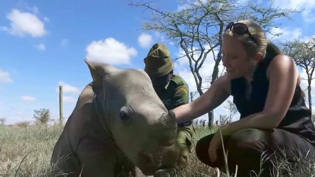 A day with orphaned 'Ringo' the rhino