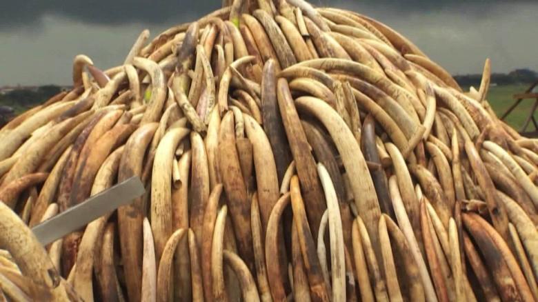 356ef61afced kenya ivory burn nairobi national park orig 00001825