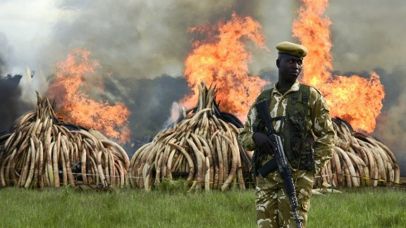 A ranger stands guard at the burning of elephant tusks, ivory figurines and rhino horns at the Nairobi National Park on Saturday.