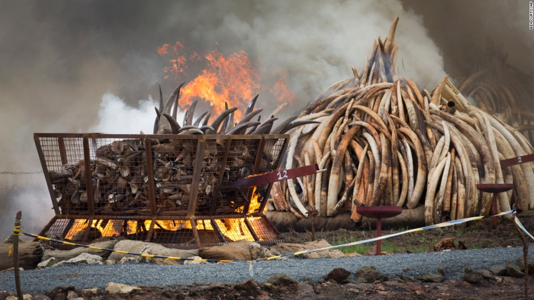 A basket of rhino horn, left, burns next to pyres of ivory on April 30, 2016. It took Kenya's Wildlife Services 10 days to build the crematorium.