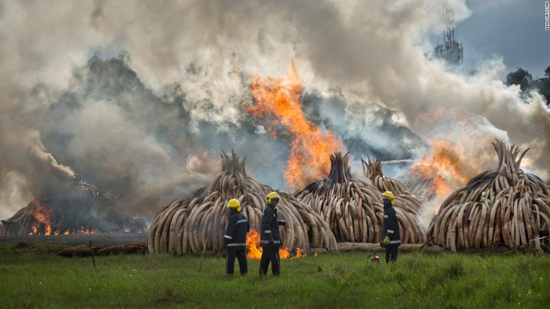 Firemen stand by at the ready as pyres of ivory are set on fire in Nairobi National Park, Kenya Saturday, April 30, 2016. The pyres will take about a week to completely burn.