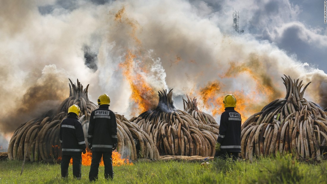 Firefighters in Nairobi, Kenya, stand in front of burning piles of elephant tusks on Saturday, April 30. Authorities burned 105 tons of ivory to discourage poaching.