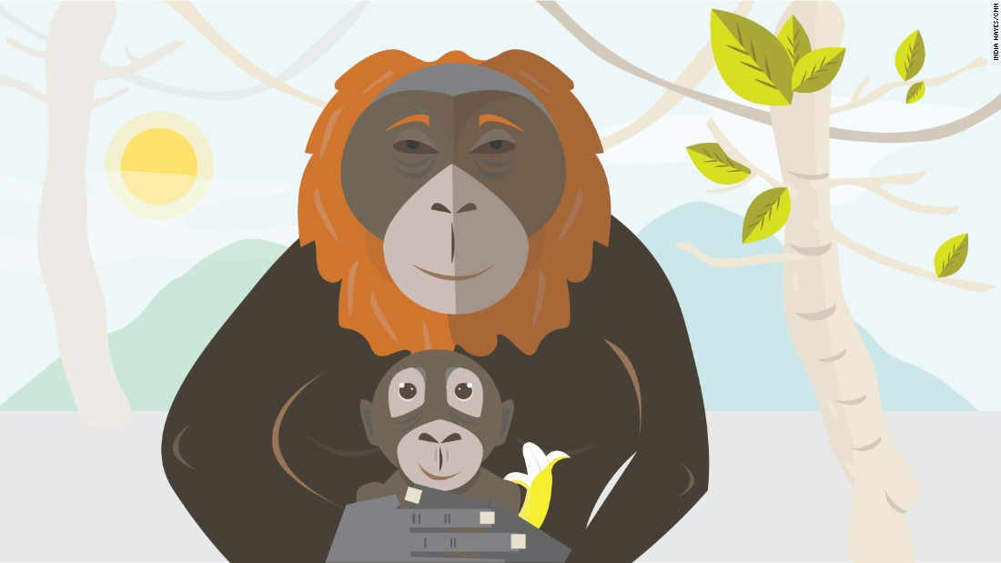 "Orangutans cuddle, <a href=""http://www.orangutan.com/orangutans/orangutan-facts/"" target=""_blank"">they can't be apart</a>.<br />Six years, mom and baby will sleep heart to heart ."