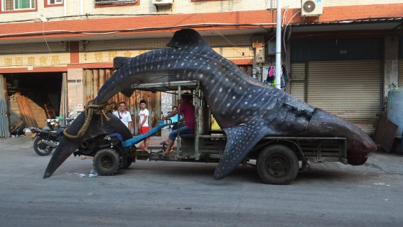 """Fisherman in Fujian claimed to have thought this whale shark was a """"sea monster."""""""
