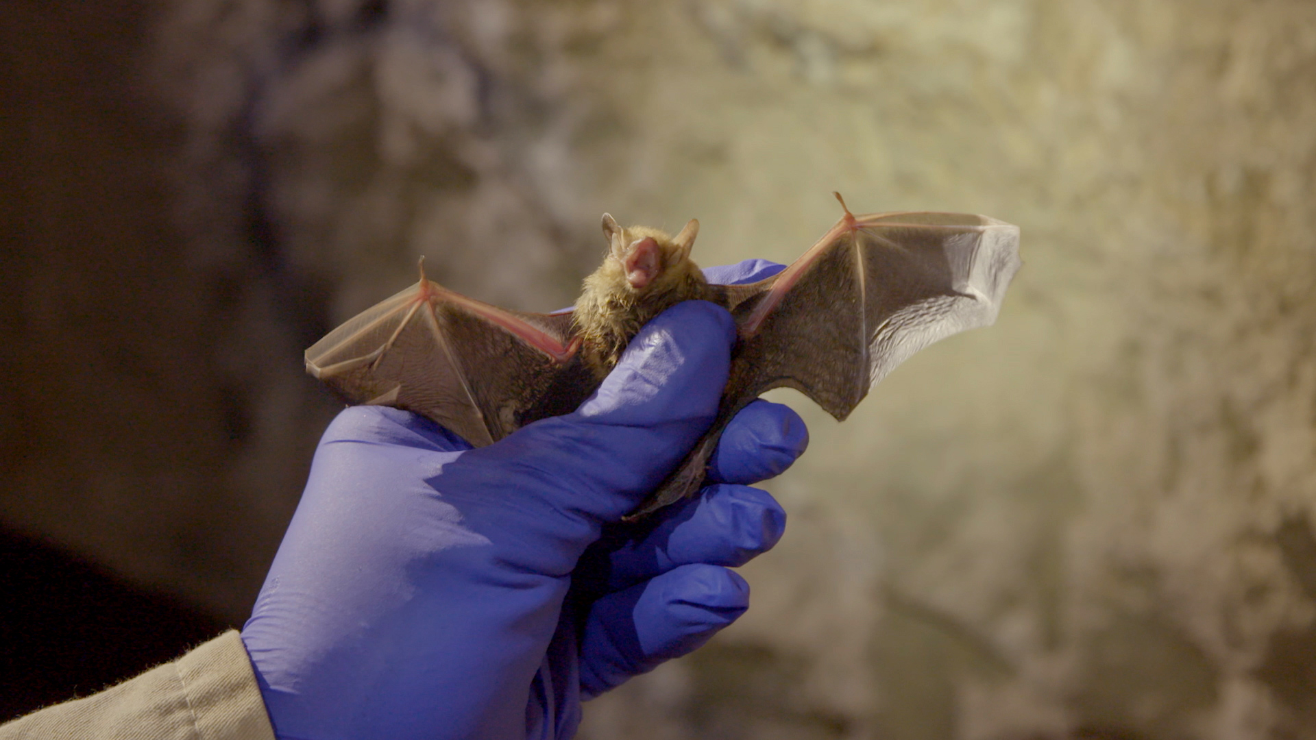Research on bats could one day help humans - CNN Video