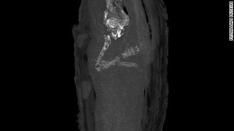 A micro CT scan revealed the first pictures of a tiny human body held within an Egyptian mummy