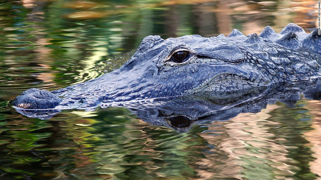 Tennessee police department says it was joking about people creating 'meth gators' by flushing drugs down toilet