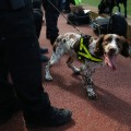 sniffer dog old trafford