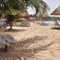 senegal saly beach