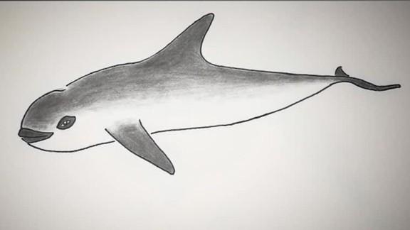 vaquita porpoise extinction pkg kinkade _00002220.jpg