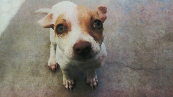 Meet Bubba, the terrier mix who tested positive for illegal drugs after being picked up in Tustin, California.
