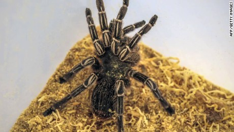 Tarantula crawls on passenger during flight