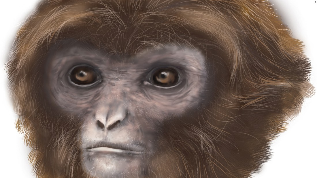 This small ape raises a big, interesting possibility: Could we be more closely related to gibbons than great apes?