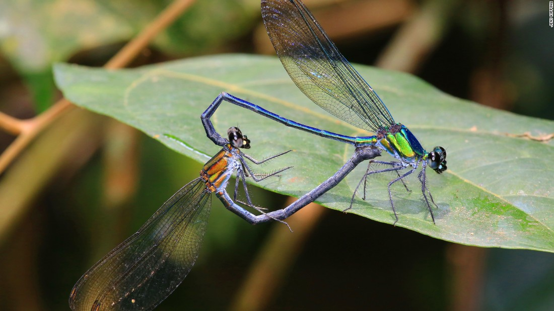 Sixty new species of dragonflies and damselflies were reported in one single publication, the most for any single paper in more than 100 years.