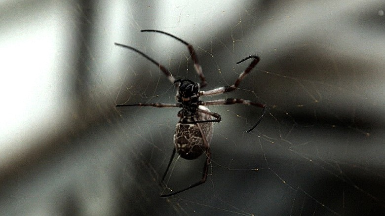 Pioneering doctor heals wounds with spider silk