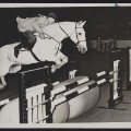harry de leyer jumping indoors