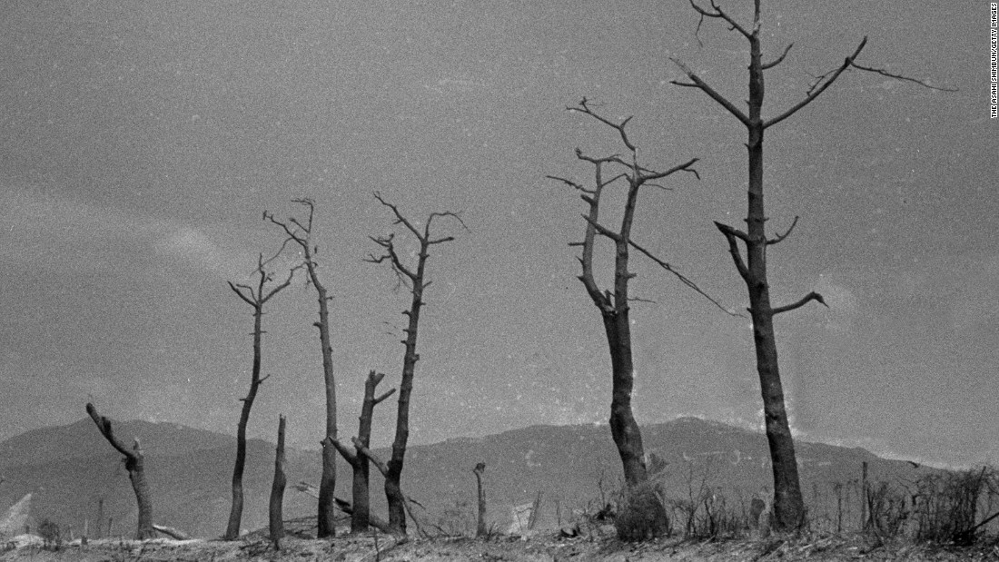 <strong>Then: </strong>Burnt trees remain standing near Hiroshima Castle.