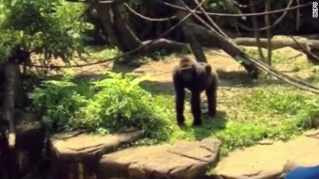 Jeff Corwin: 'The zoo is not your babysitter'
