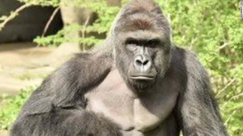 Cincinnati Zoo defends gorilla shooting