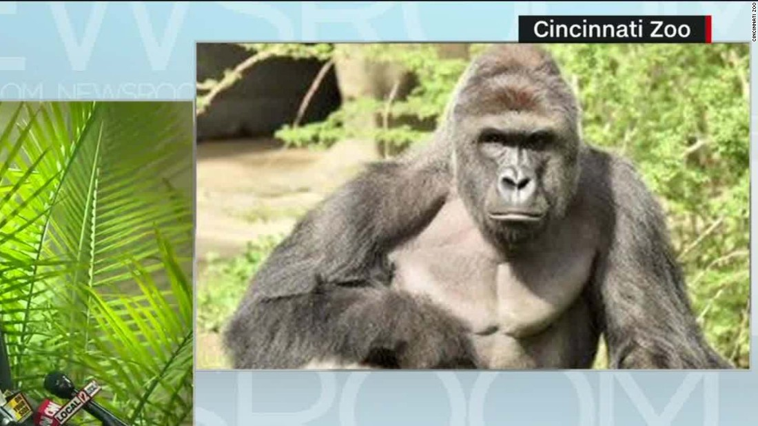 gorilla killing 3 year old boy s mother won t be charged cnn