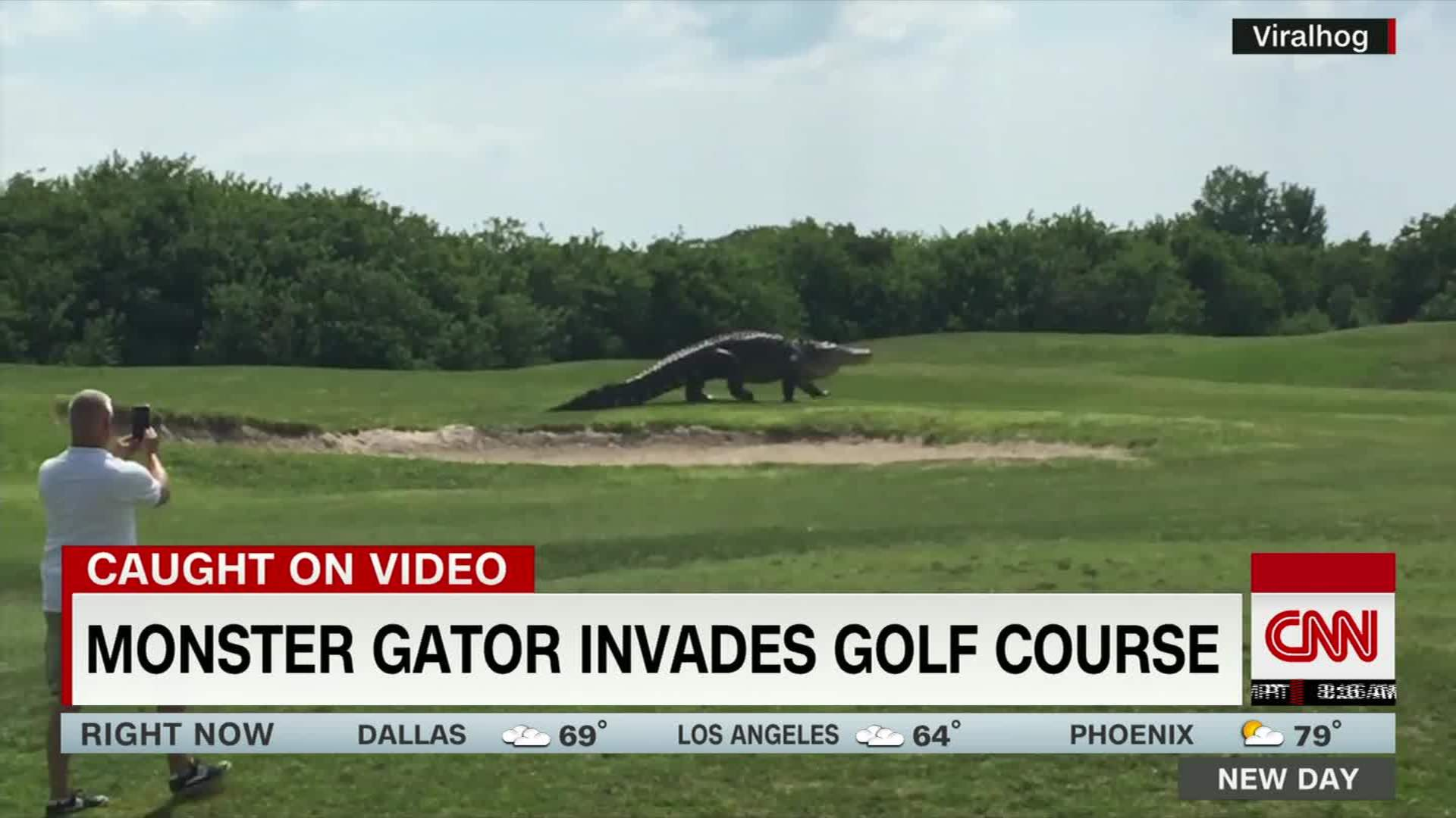 Gigantic Gator Spotted On Golf Course Cnn Video