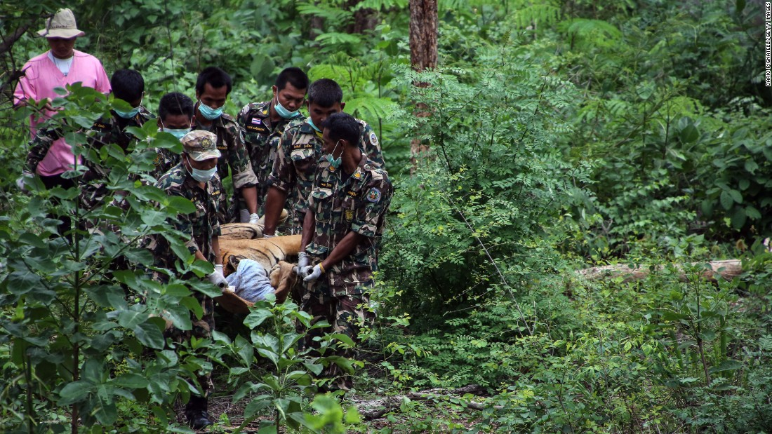 Thai officers carry a sedated tiger from its cage on June 1.