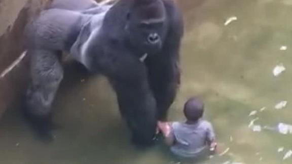 gorilla 911 call audio Cincinnati Zoo orig_00000000.jpg