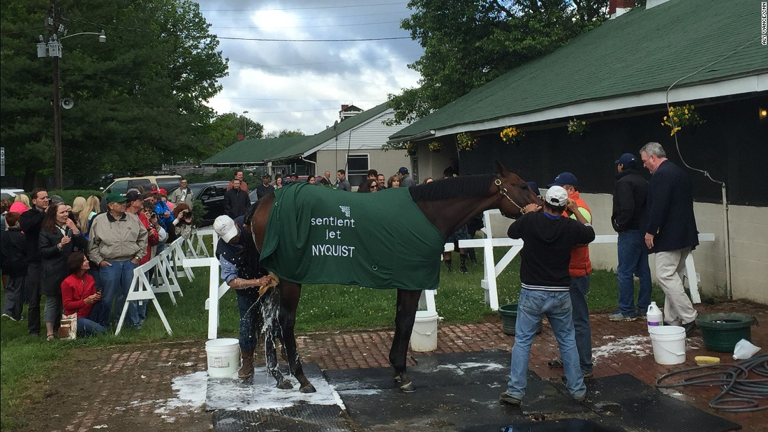 Nyquist, now retired from racing, gets a very public bath after last year's triumph.