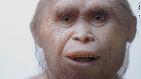 This is how the 'Hobbits' of Indonesia became so small