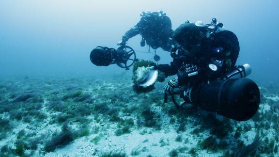 Project Baseline divers analyzing ocean life near the Hollywood Beach sewage outflow. Much of the ocean floor in this area is covered by invasive algae, which some experts believe has spread expansively in part because of nutrient loading.