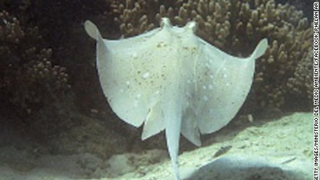 stingray fever tampa bay mobile orig mss_00001401