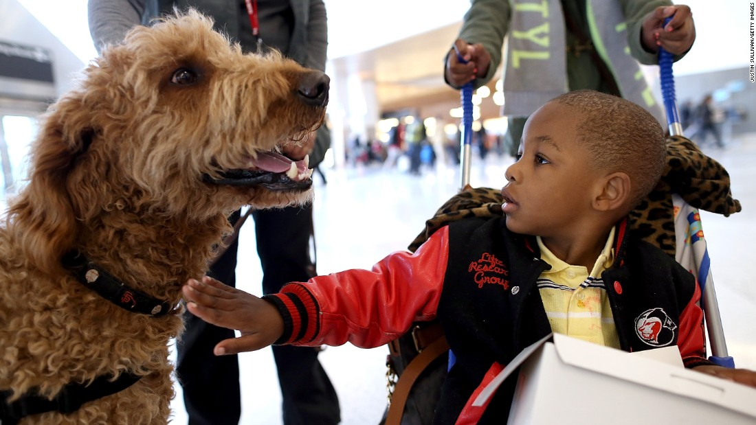 "A young boy pets a therapy dog named Toby inside Terminal 2 at San Francisco International Airport on December 3, 2013 in San Francisco, California.  The San Francisco SPCA and San Francisco International Airport joined forces to launch a new program called ""Wag Brigade"" that will have a team of certified therapy dogs that will patrol the airport's to help calm stressed travelers during the busy holiday travel season."