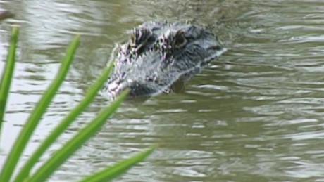 Deadly alligator attack sparks changes at Disney_00000412.jpg