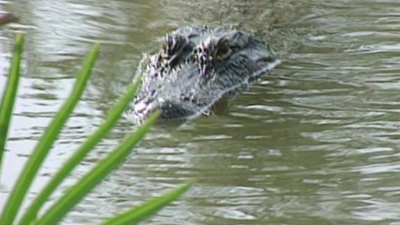 Deadly alligator attack sparks changes at Disney_00000412.jpg