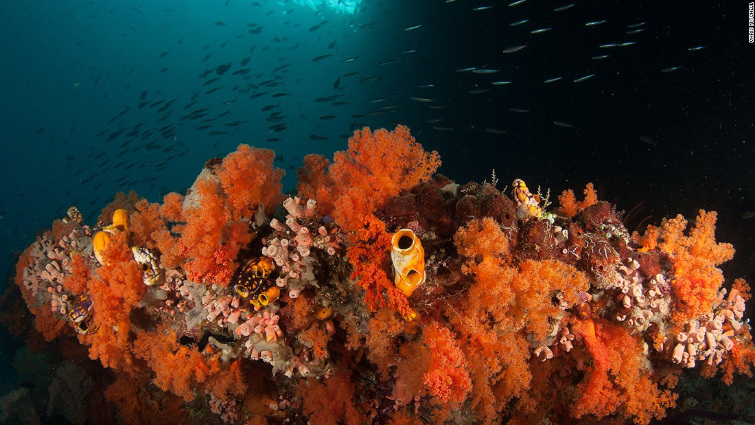 Even in the darker corners of Raja Ampat the corals manage to thrive.<br />