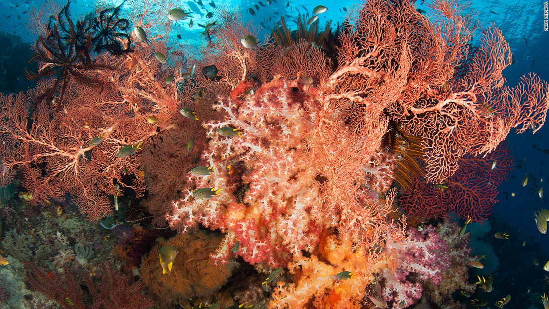 Sea fans, soft corals and feather stars cluster together in a colorful riot. The sheer abundance and pristine state of Raja's coral reefs are what attract so many divers to make the long journey there. <br />