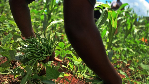 Whether it's too much junk food or a lack of nutritious foods, malnutrition fueled by poor diet is on the rise according to a new report by the Global Panel on Agriculture and Food Systems for Nutrition.