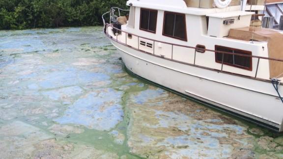 Algae-covered water at Stuart's Central Marine boat docks.
