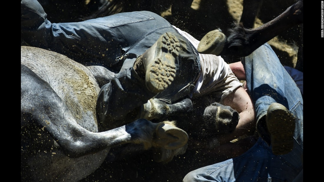 A reveler tries to hold on to a wild horse Sunday, July 3, during the Rapa das Bestas, or shearing of the beasts, in Sabucedo, Spain. During the four-day festival, wild horses are rounded up and wrestled to the ground to have their manes and tails sheared.