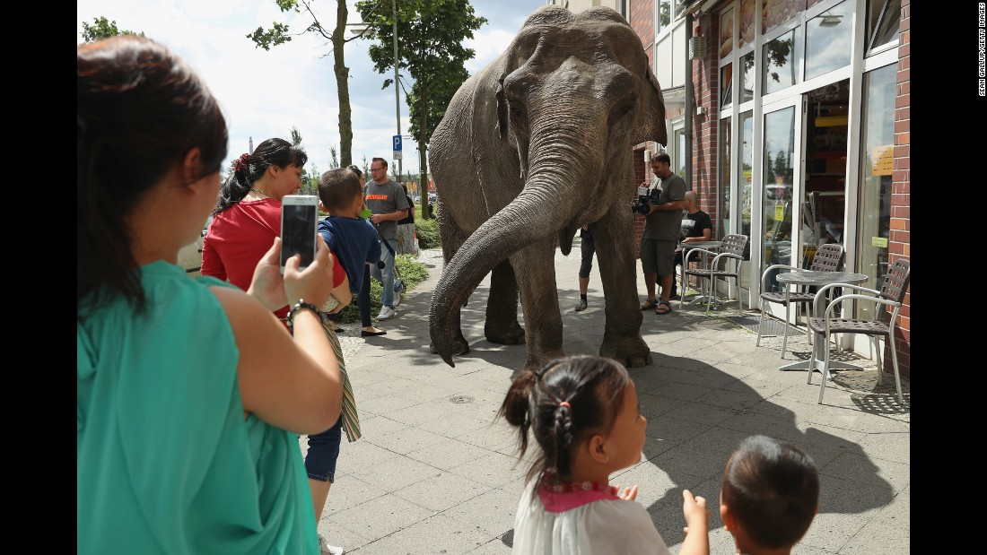 Passers-by admire Maja, a 40-year-old elephant, outside a bakery in Berlin on Friday, July 1. Maja was taking a stroll through the neighborhood with her minders from a nearby circus.