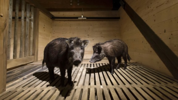A pair of animals are displayed in the cages inside the reproduced ark.