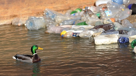 A duck swims past plastic bottles floating near the banks of the Sava river in Belgrade on February 13, 2013. AFP PHOTO / ANDREJ ISAKOVIC        (Photo credit should read ANDREJ ISAKOVIC/AFP/Getty Images)